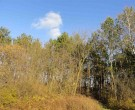 4.6 Acres Pine Bluff Road