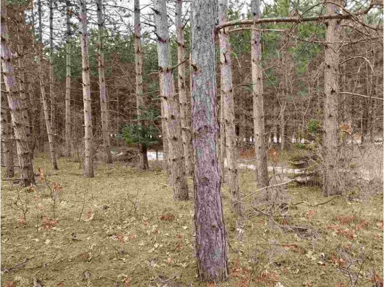 11076 EDMINSTER RD, Waupaca, WI by RE/MAX Lyons Real Estate $53,900