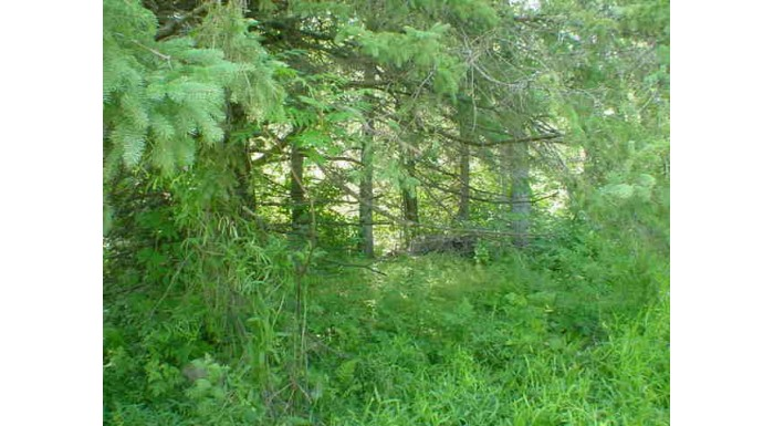 Lt 2 Hwy 64 Wolf River, WI 54491-9740 by Re/Max North Winds Realty, Llc $22,000