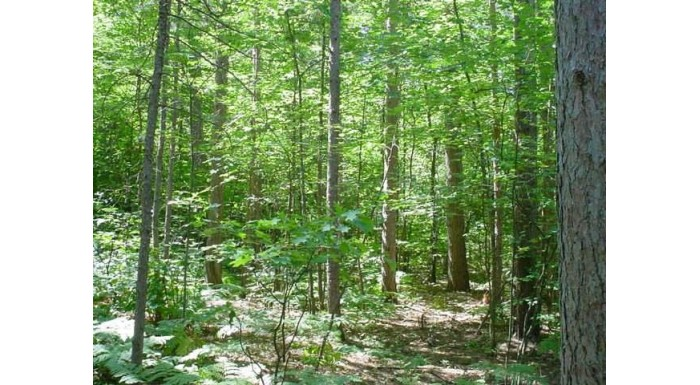 On Lake Mildred Rd Newbold, WI 54501 by Coldwell Banker Mulleady-Rhldr $20,000