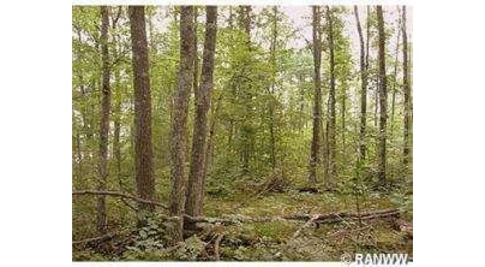 Lot 18 Tanglewood Pkwy Hayward, WI 54843 by C21 Woods To Water $19,900