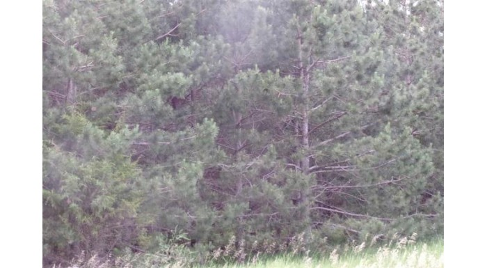 35 Ac County Road Cm Marcellon, WI 53954 by Re/Max Connections $255,000