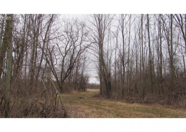 0  Whitney Rd,  Gaines, MI 48436 by Remax Grande $225,000