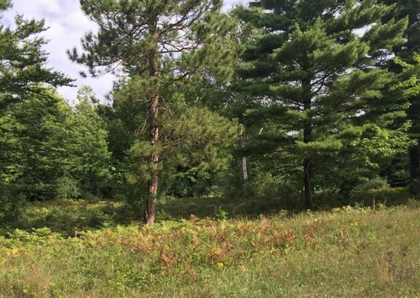 Kerry Road,  Manistee, MI 49660 by Lighthouse Realty-Ludington $72,900