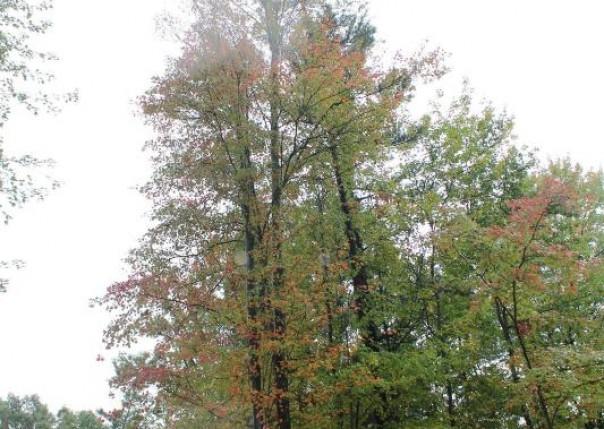 1247 Tall Tree, Muskegon, MI, 49445
