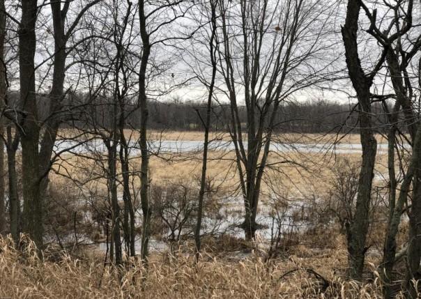 93.3 Acres Marl Lake, Athens, MI, 49011