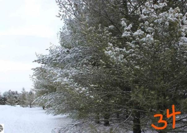 2161 Fox Run Road, West Branch, MI, 48661