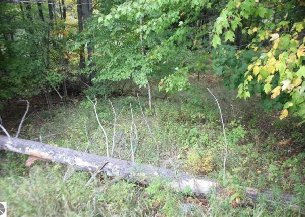 lot 098 43 1/2 Road, Cadillac, MI, 49601