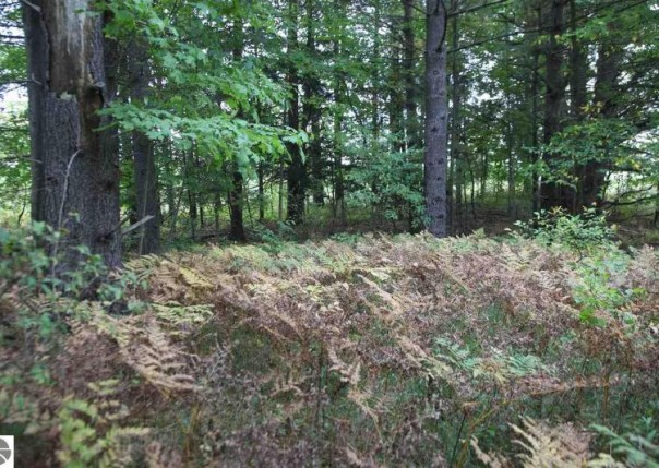 lot 099 43 1/2 Road, Cadillac, MI, 49601