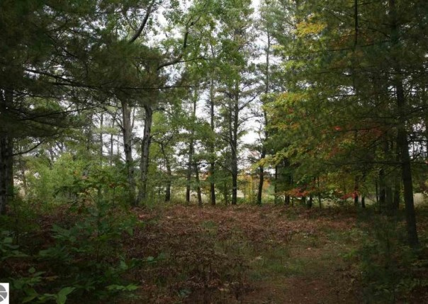 52 LOT S 43 1/2 Road, Cadillac, MI, 49601