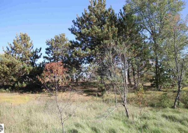 138 LOT Lamplighter Lane, Cadillac, MI, 49601