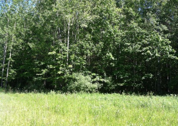 Forest Hills Drive,  Spruce, MI 48762 by Re/Max New Horizons $16,900