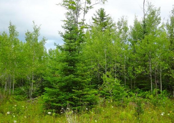 NHN Indian 110.27 Acres, Alpena, MI, 49707