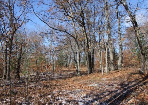 Lakeside 320-Acres, Curran, MI, 48728
