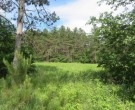 3 Acres N 136th Avenue