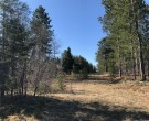 31.2 Acres Weckerle Rd