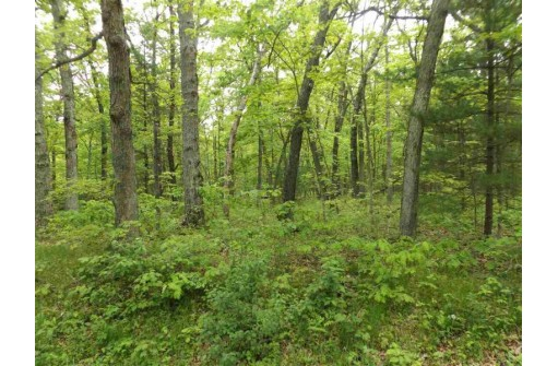 19.85 Ac Berry Rd, Lake Delton, WI 53940
