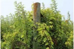 56+/- ACRES Hwy 14 Arena, WI 53503 by Midwest Land Group Llc $700,000