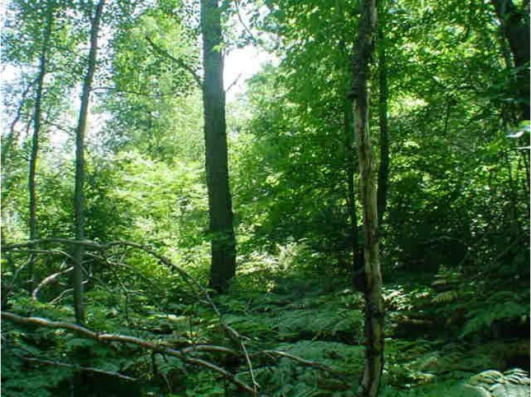 Lot 1 HWY 64, White Lake, WI by RE/MAX North Winds Realty, LLC $20,000