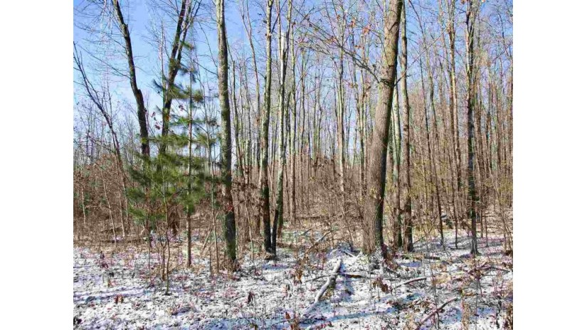 Parcel 14 Forest Edge Road Westboro, WI 54490 by Dixon Greiner Realty, Llc $29,900