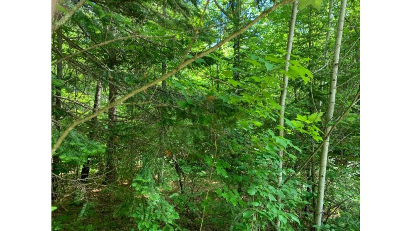 Off Flowage Rd 173.65 Ac Sherman, WI 54552 by Century 21 Pierce Realty - Mercer $199,500