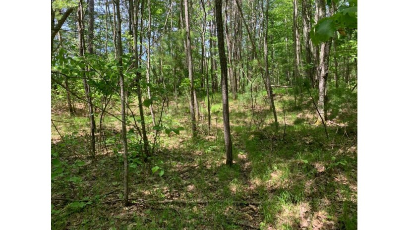LOT 23 Whitetailed Deer Dr Wilson, WI 54487 by Lakeplace.com - Vacationland Properties $25,999