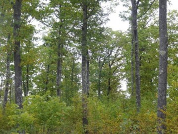 Near Half Mile Road, Herbster, WI 54844
