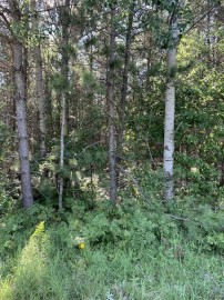 NEAR Seven Mile Road, Herbster, WI 54844