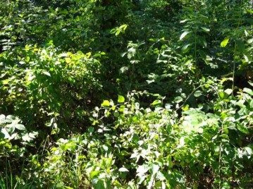 Lot 208 Timber Tr, Germantown, WI 53950