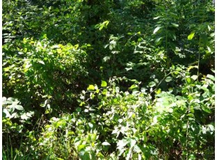Lot 208 Timber Tr New Lisbon, WI 53950