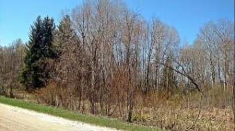 2.56 Acres S Tuttle Road Custer, MI 49405