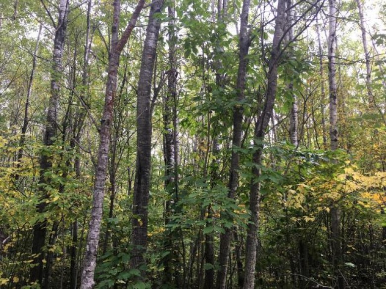 On Buck Ln, Cassian, WI by Pine Point Realty $130,000