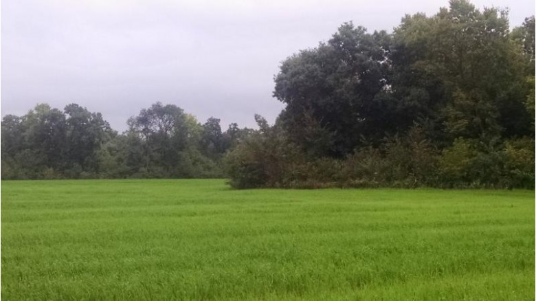 49.92 Acres County Road X, Albany, WI by Right Now Realty Llc $265,000