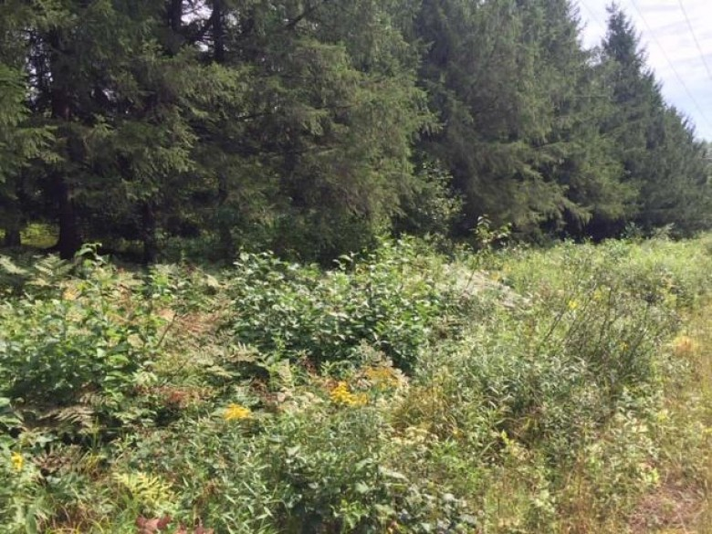 ON Meadowbrook Ln, Ojibwa, WI by Birchland Realty, Inc - Park Falls $40,000