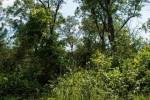 39.77 AC Fern Ave, Grand Marsh, WI by Castle Rock Realty Llc $140,000