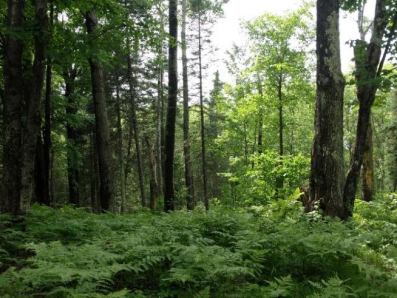 ON Dankes Rd, Flambeau, WI by Re/Max New Horizons Realty Llc $37,500