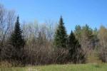 Badger Avenue Wild Rose, WI 54984 by Keller Williams Fox Cities $149,900