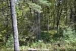 L10 Timber Bay, Friendship, WI by Landman Realty Llc $74,950