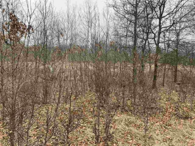 160 AC County Road C Hancock, WI 54943 by United Country Midwest Lifestyle Properties $440,000