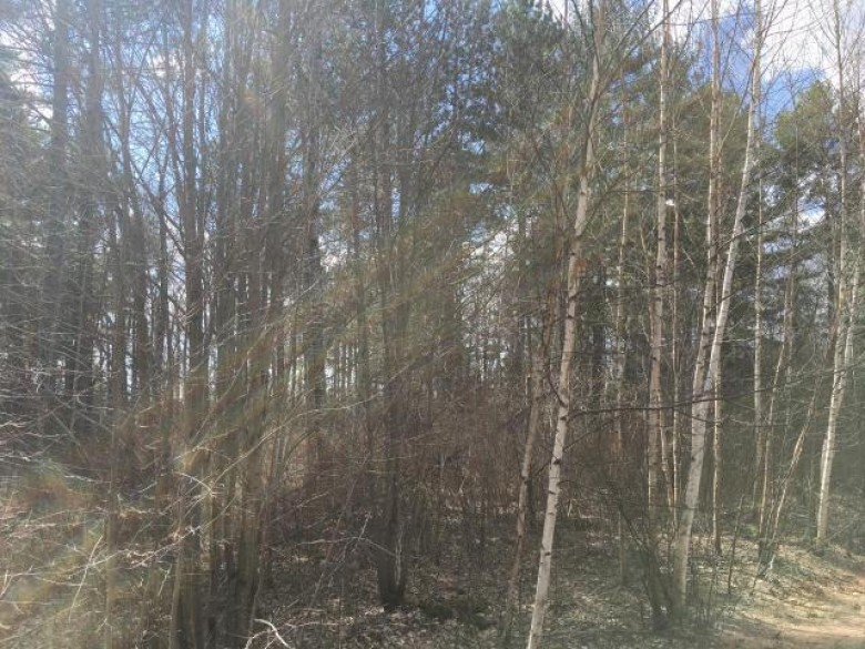 ON Swamp Lake Rd Cassian, WI 54487 by Re/Max Property Pros - Tomahawk $132,000