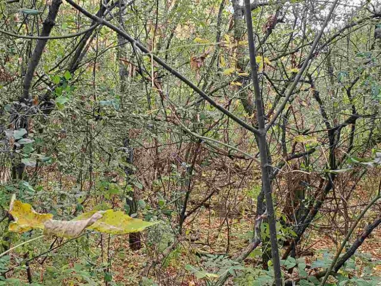 14th Avenue Wild Rose, WI 54984 by RE/MAX Lyons Real Estate $40,000