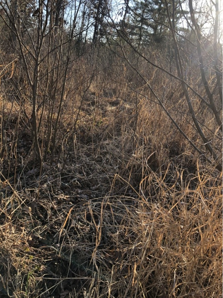 76.96 ACRES County Road I, Fairchild, WI by First Weber Real Estate $184,900