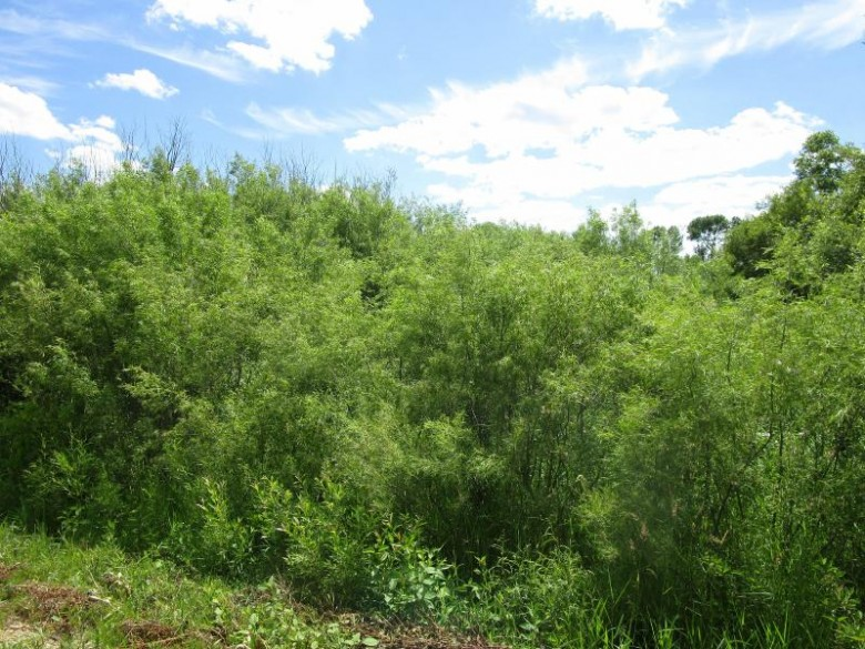 N2493 Lakeshore Dr, Bonduel, WI by Re/Max North Winds Realty, Llc $29,900
