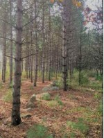 E1894 Dayton Road Waupaca, WI 54981 by First Weber Real Estate $210,000