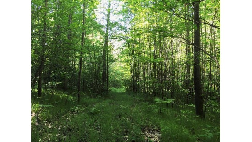 9.56 Acres Horseshoe Rd Pembine, WI 54156 by Hanson Realty, Inc (wi/Mi) $34,900