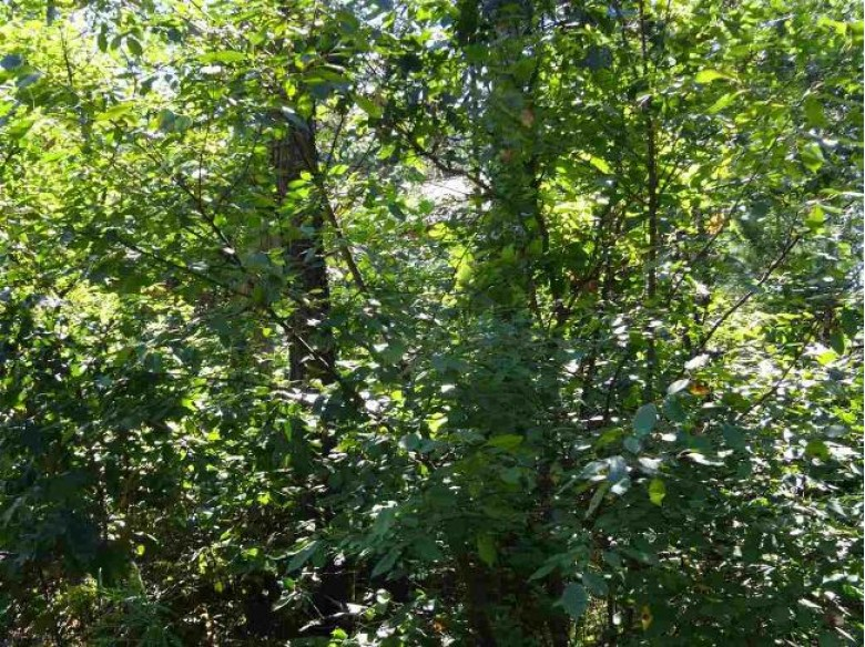 LOT 208 Timber Tr, New Lisbon, WI by Castle Rock Realty Llc $7,800