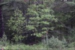 L26 19th Pass, Arkdale, WI by Castle Rock Realty Llc $129,900