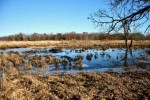 100.33 AC Sawmill Rd, Richland Center, WI by Whitetail Properties Real Estate Llc $247,500