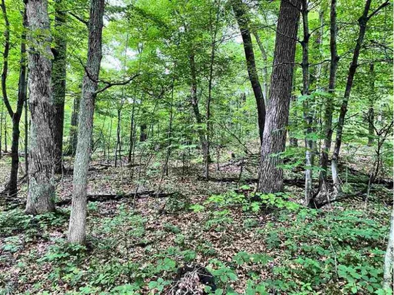 L8 Innisbrook Ln Wisconsin Dells, WI 53965 by First Weber Real Estate $25,900