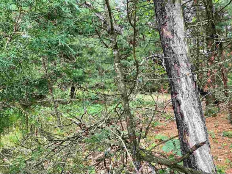 143 Northwoods Cir Wisconsin Dells, WI 53965 by First Weber Real Estate $35,000